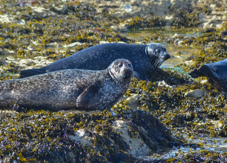 Wild Seals on Beach, Rathlin Island Ferry Day Trip from Ballycastle