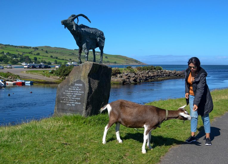 Johann the Cushendun goat, GIants Causeway Coastal Route, Northern Ireland